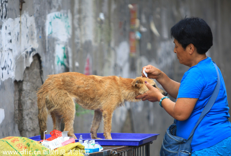 On The Yulin Dogs Hypocrisy And Racism The Vegan Strategist