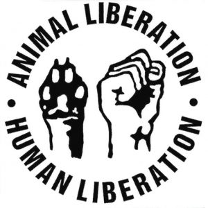 human fist and animal paw