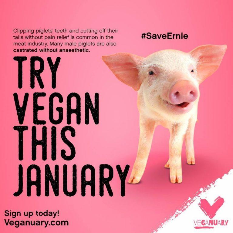 pig veganuary